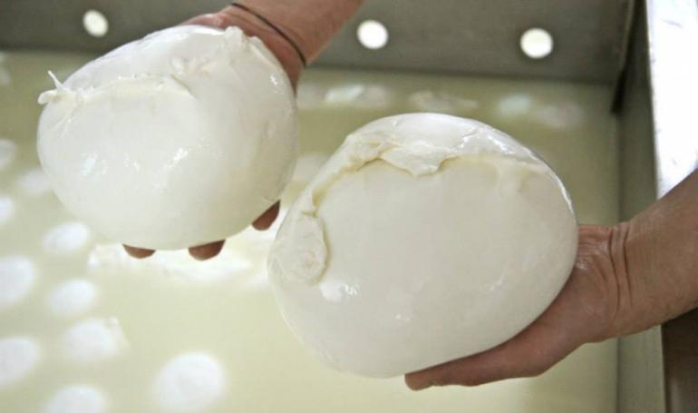 Produzione Mozzarella di Bufala Campana